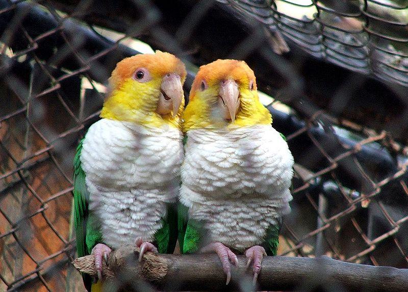 Aves - Zoológico de São Paulo - Foto de Ivan Monticelli ©