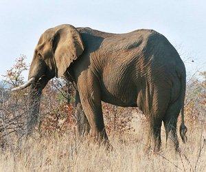 Parque Kruger - África do Sul