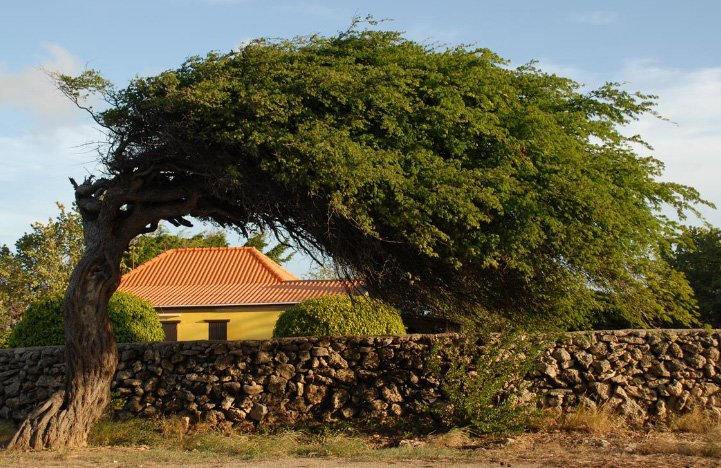 O jardim é uma parte muito importante das casas de Aruba!