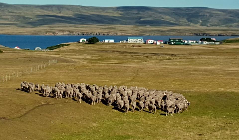 As belas Ilhas Malvinas