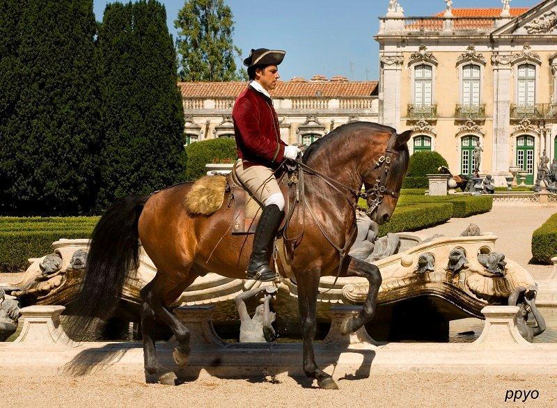 Escola Portuguesa de Arte Equestre, nos jardins do Palácio de Queluz