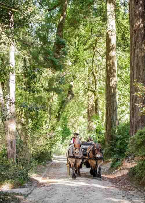 Passeios de Charrete no Parque da Pena - Crédito EMIGUS ©