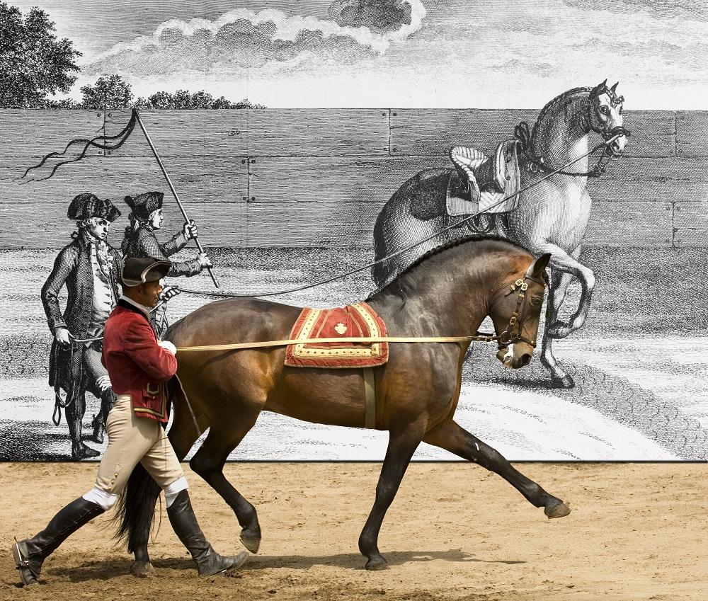 Escola Portuguesa de Arte Equestre em 'Marselha – Capital Europeia da Cultura'