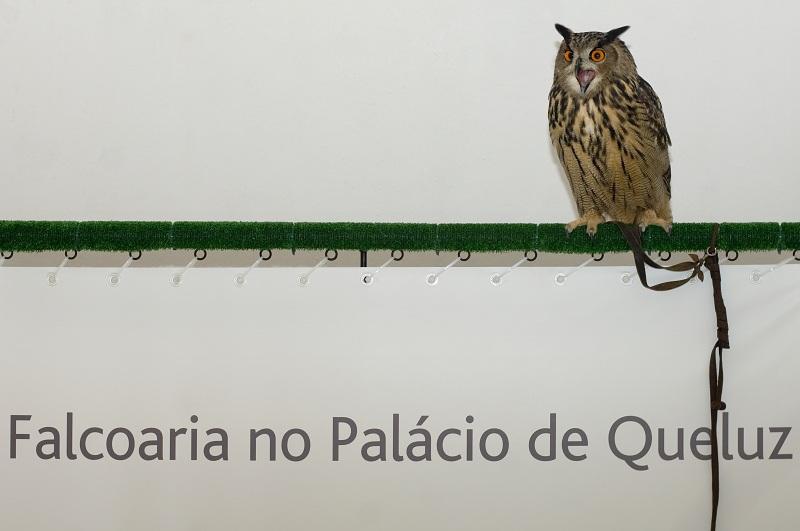 Créditos Pedro Yglesias©