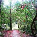 Jardim das Camélias - Parque Pena - Foto de PSML Nuno Oliveira ©