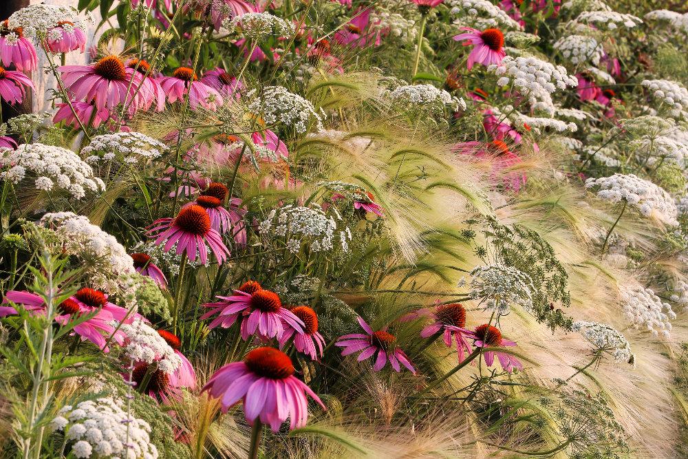 """Rosanna Castrini, com a fotografia """"My Garden Prairie"""""""