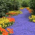 Keukenhof - Maior jardim de flores do mundo