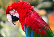 Zoologico de São Paulo – Passeio Turistico